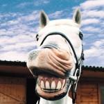 Ржем и пашем или да здравствует 2014й год лошади