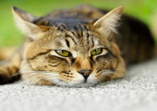все любят котиков