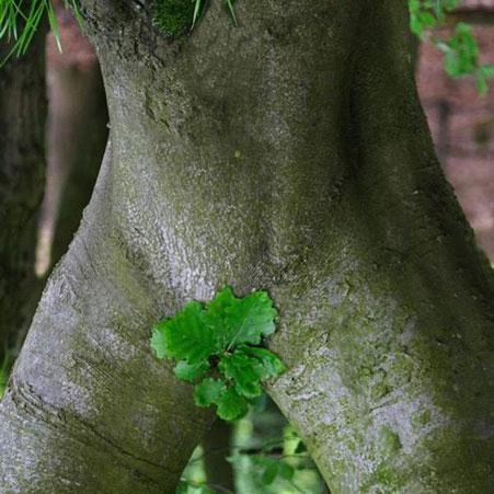 эротическое растение